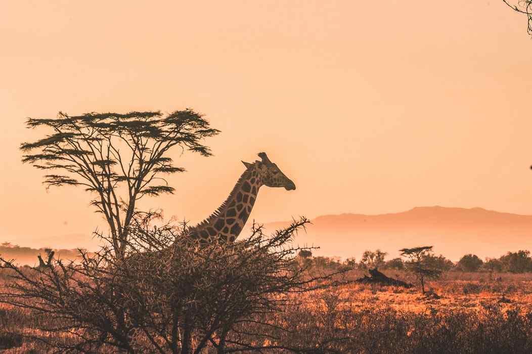 Offerta viaggio in Sudafrica in auto e soggiorno mare