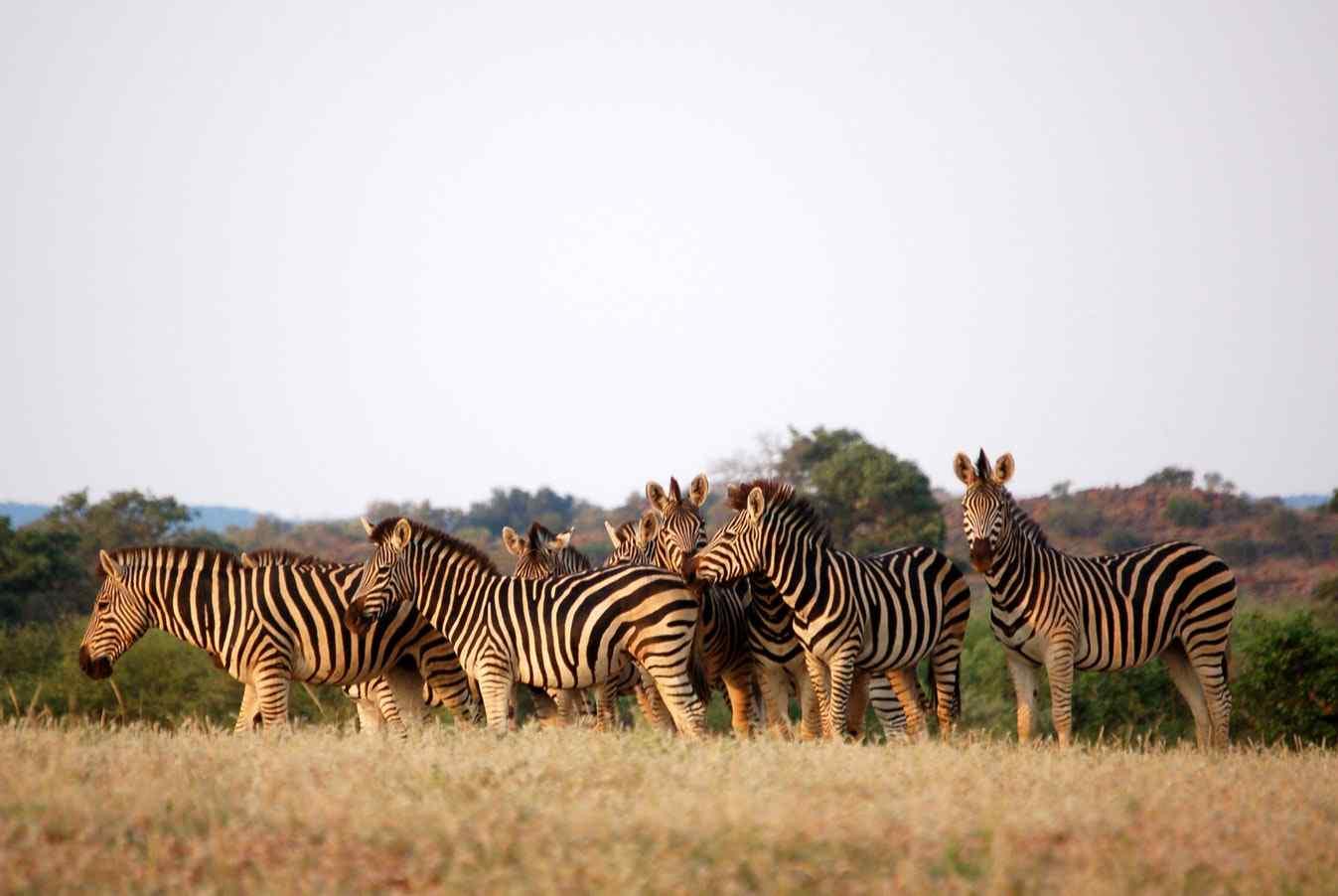 Offerta Botswana e Victoria Falls