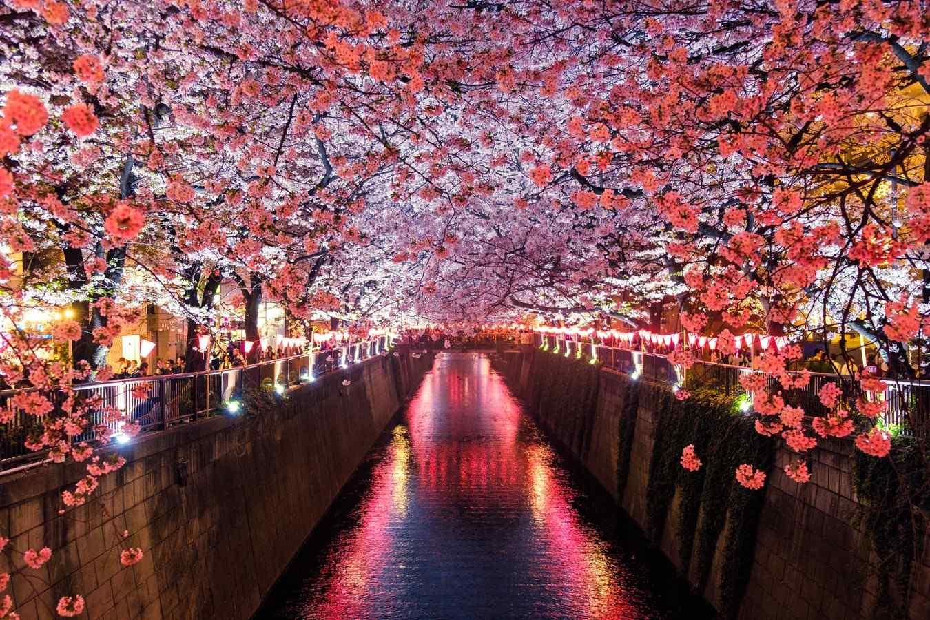 Offerta speciale Sakura Giappone